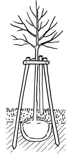 Baume-richtig-abstuetzen