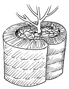 Kaelteschutz Pflanzen